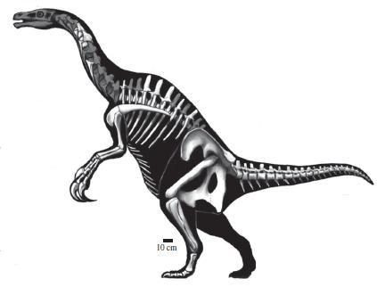 20110520083138nothronychus-dinosaur-therizinosaur.jpg