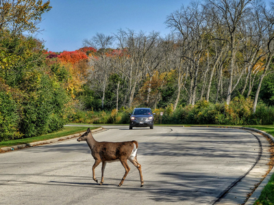 Each year, nearly 20,000 Wisconsin residents collide with deer each year, which leads to about 477 injuries and eight deaths annually.