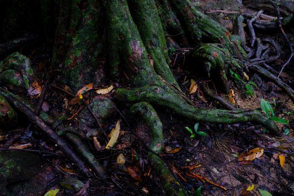 Mangrove Colors thumbnail