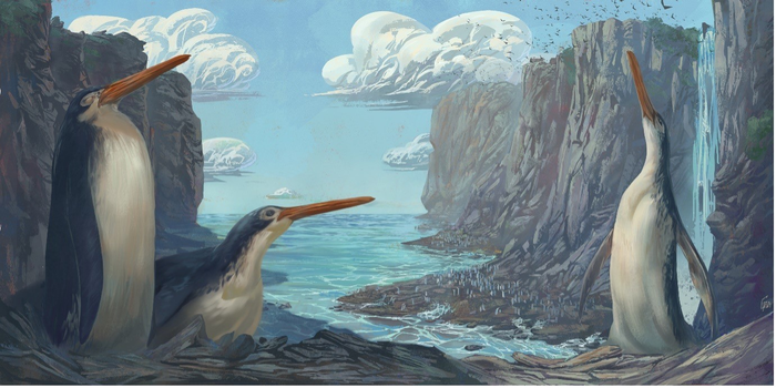 An artist's interpretation of what the tall, skinny penguins would look like when they roamed the earth among tall rocky cliffs along the ocean's coast
