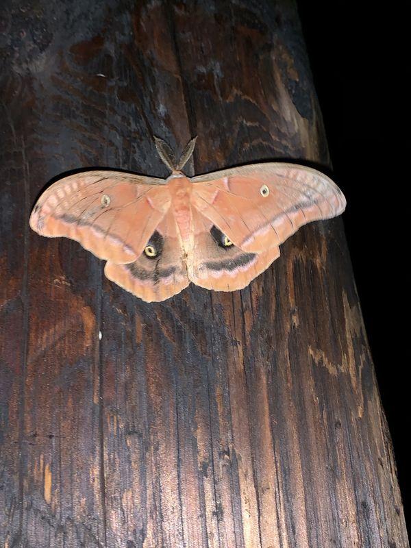 Nighttime Moth thumbnail