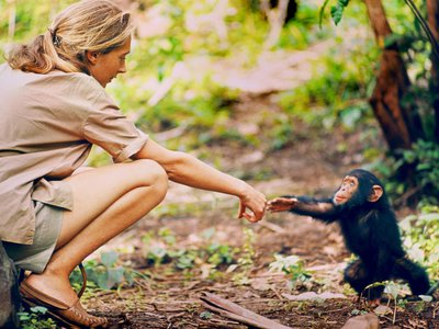 """""""Becoming Jane: The Evolution of Dr. Jane Goodall"""" is a multimedia exhibition charting the life and career of the world's foremost expert on chimpanzees."""