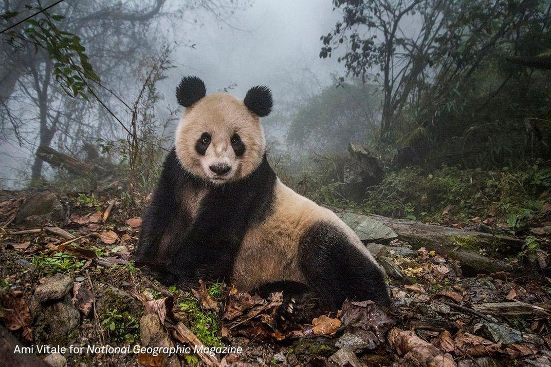 Winning Nature Photos Capture Triumph and Turmoil in the Animal Kingdom