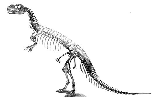 20110520083144ceratosaurus-skeleton-marsh.jpg