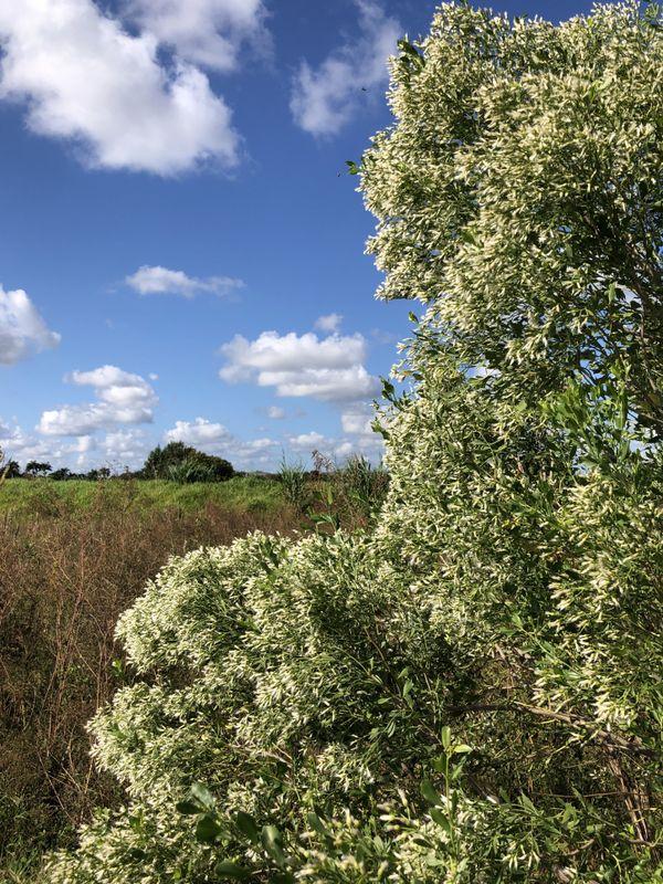 Cutler Wetlands thumbnail