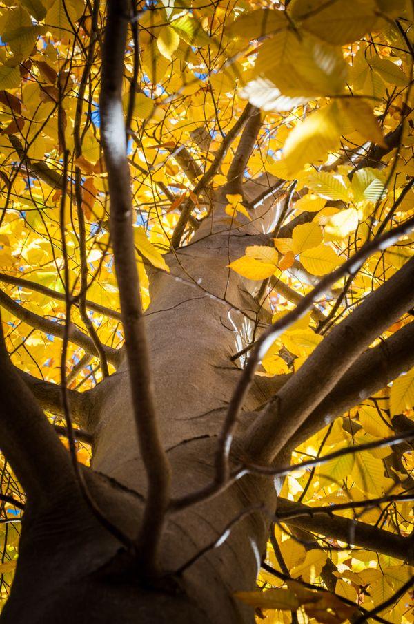 Sunlight Through Leaves thumbnail