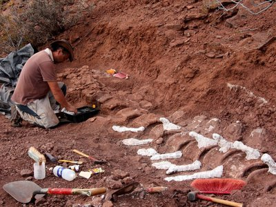 A paleontologist excavating a 98 million-year-old fossil which may belong to the largest land animal ever. Researchers first started unearthing the creatures remains in 2012 at the Candeleros Formation in the Neuquen River Valley, Argentina.