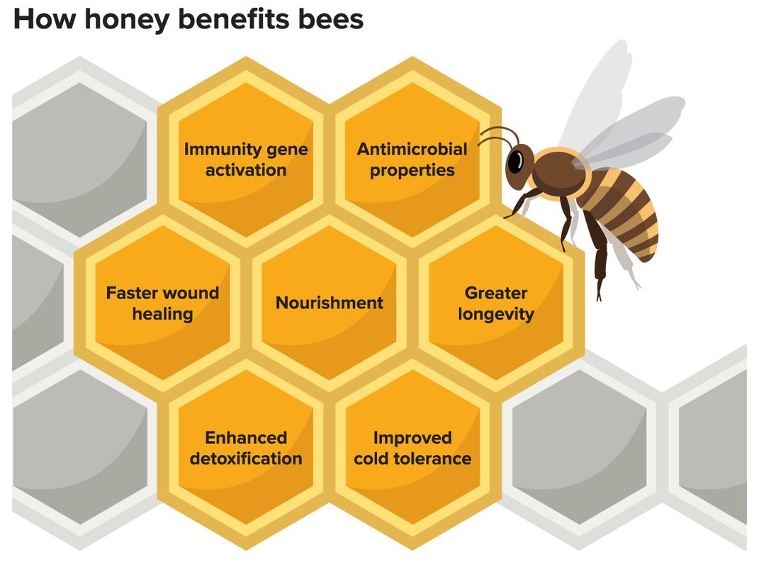 Honey Has Numerous Health Benefits for Bees