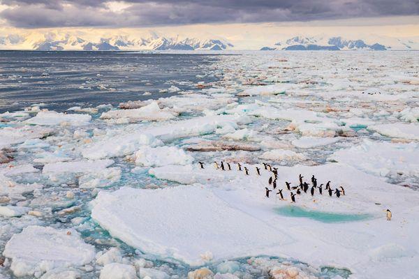Adelie penguis in Ice of Ross Sea. Antarctica thumbnail