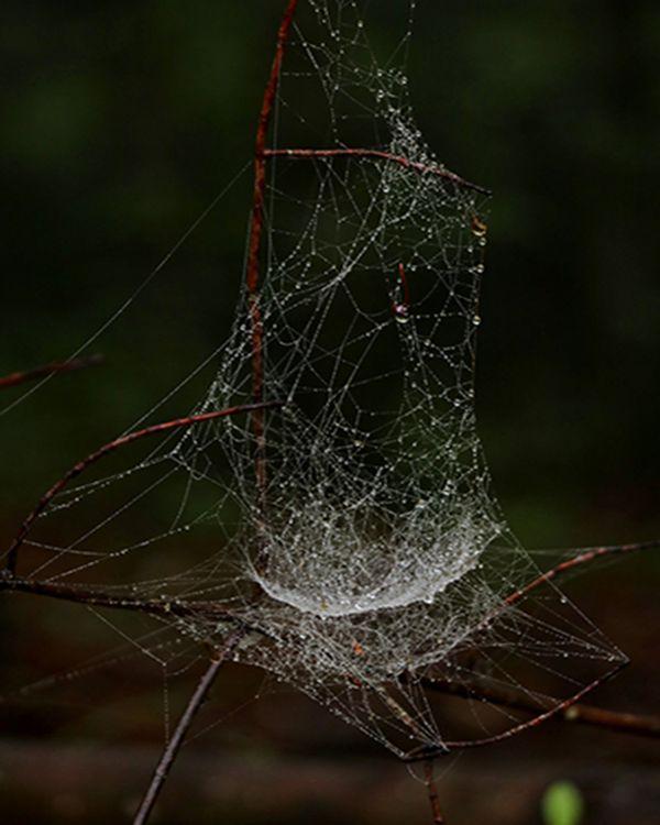 Web after the rain thumbnail