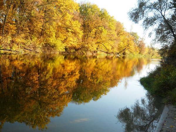 Golden autumn thumbnail
