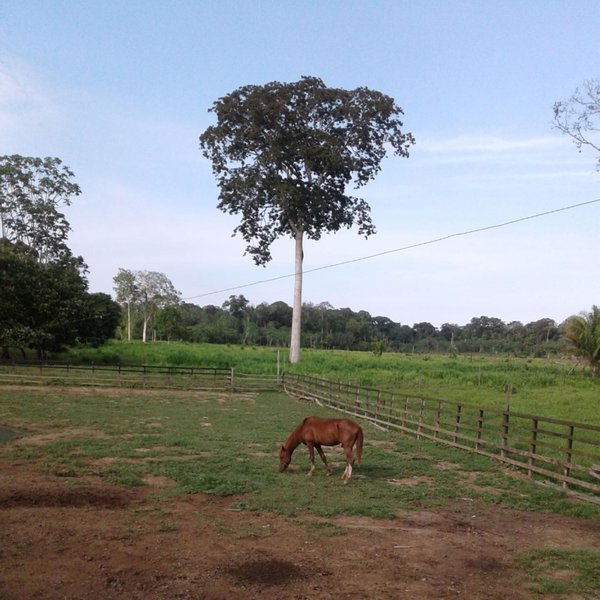 A Ranch in Amazonia thumbnail