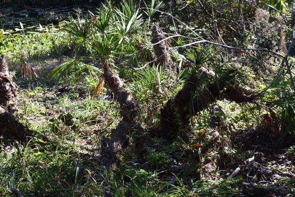 Natural Florida thumbnail