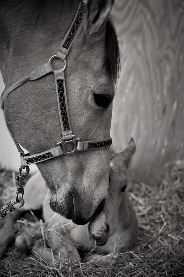 A Mare and her Colt. thumbnail