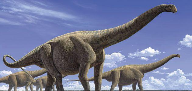 Giant-Animals-herbivorous-631.jpg