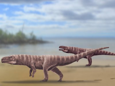 Reconstruction of Batrachopus trackmaker from the Lower Cretaceous Jinju Formation of South Korea