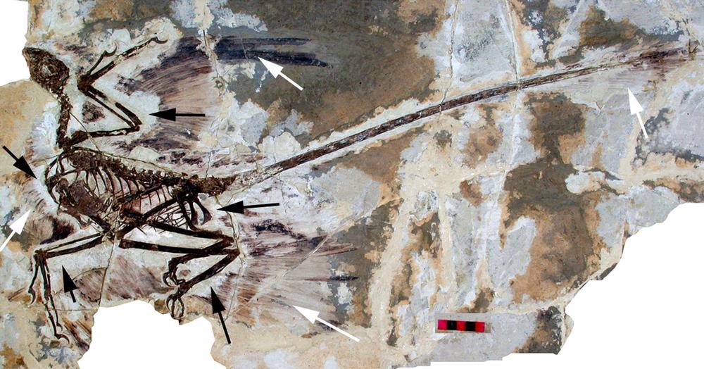 dinosaur fossilized bones