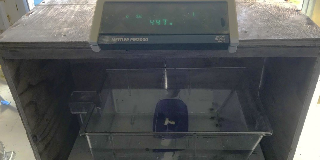 A scale used to measure the buoyant weight of a coral fragment, similar to a food scale in a grocery store. The coral fragment is placed in a bucket of water at the base and the weight displays digitally at the top.
