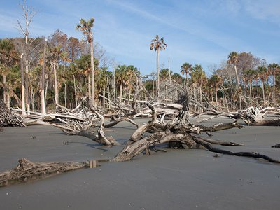 A ghost forest on Capers Island, South Carolina.