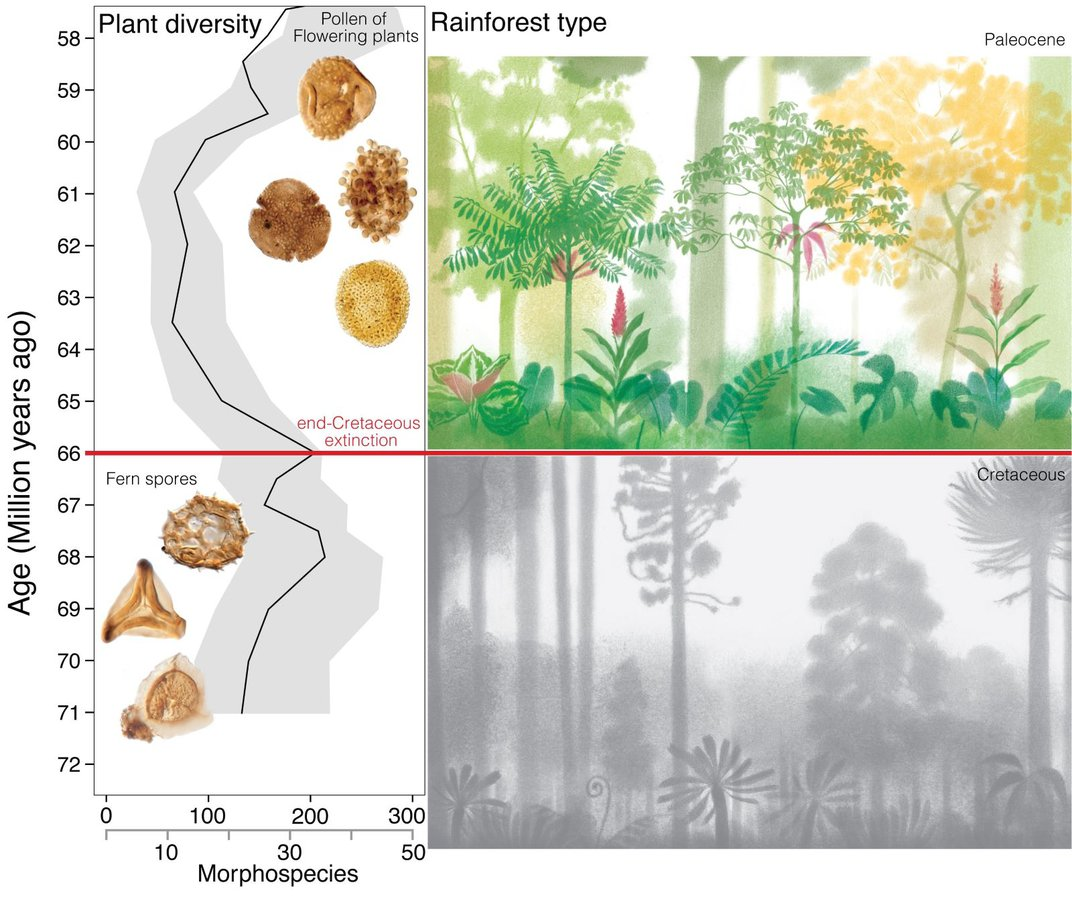 How the Dinosaur-Killing Asteroid Spurred the Evolution of the Modern Rainforest