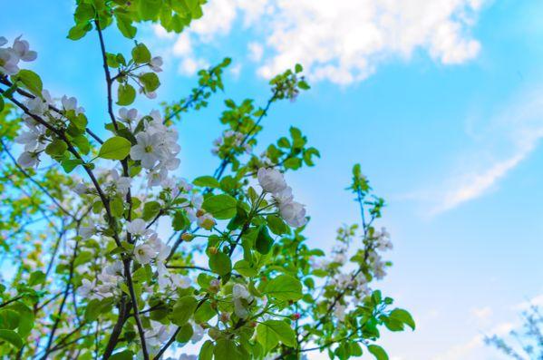 Sweet flowering flowers thumbnail