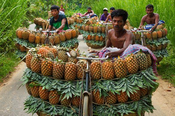 Pineapple seller thumbnail