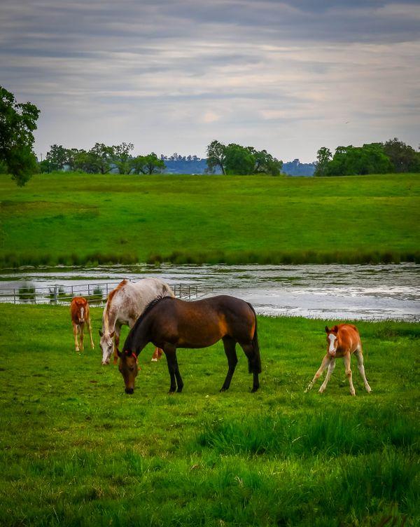 2017 Quarter Horse foal thumbnail