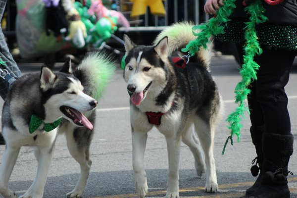 Huskies thumbnail