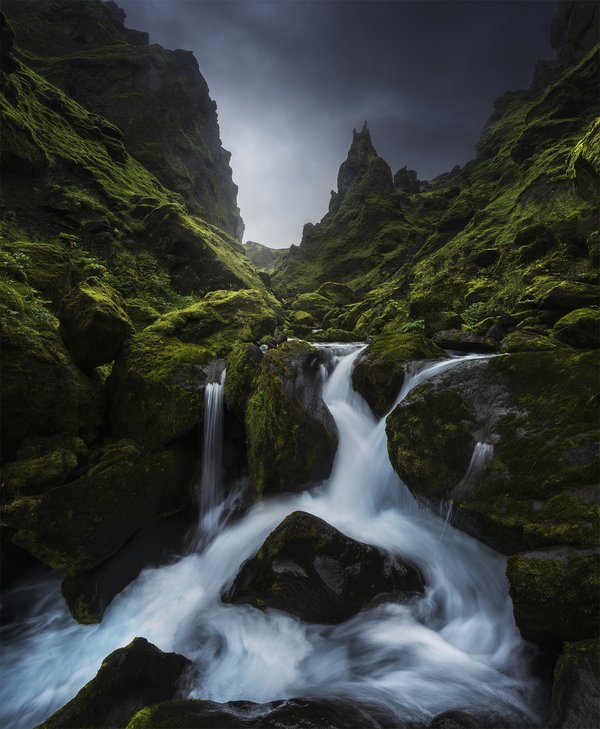 A small stream flowing through the lush green Iceland moss, in a small canyon.