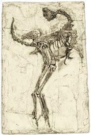 20110520083131caudipteryx.jpg