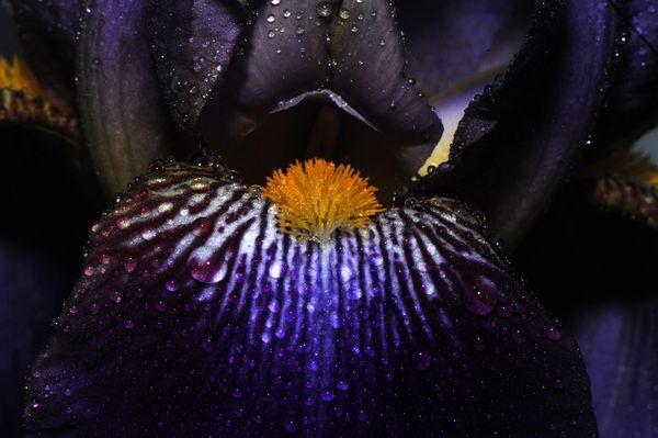 Galaxy through an Iris  thumbnail