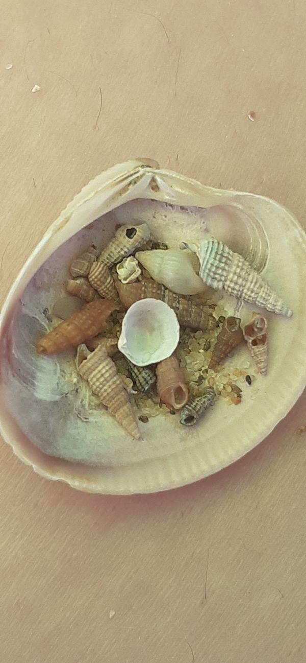 Seashells thumbnail