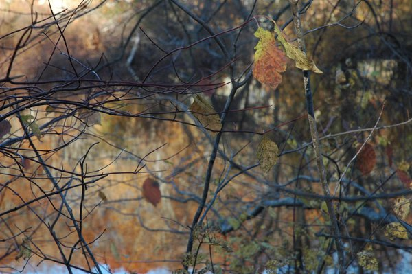 Final clinging leaves thumbnail