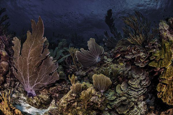 Pristine Caribbean coral reef thumbnail