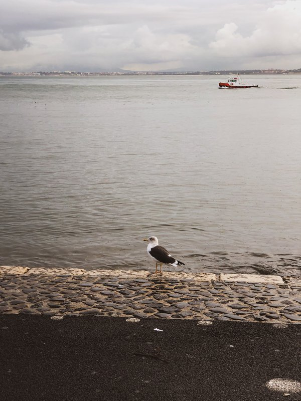 A seagull and a boat thumbnail
