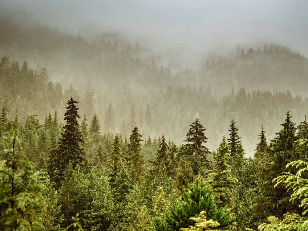Photo shows a foggy tree-covered landscape