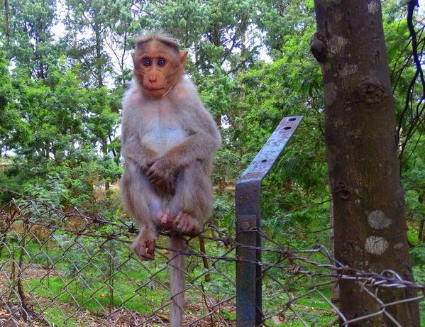 The monkey pose thumbnail