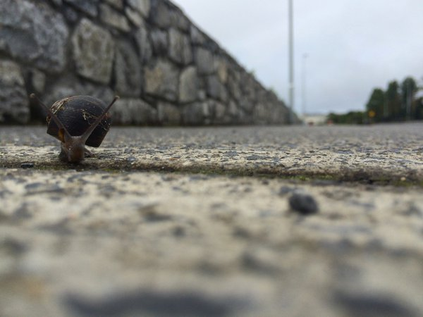 Snail's Eye View thumbnail