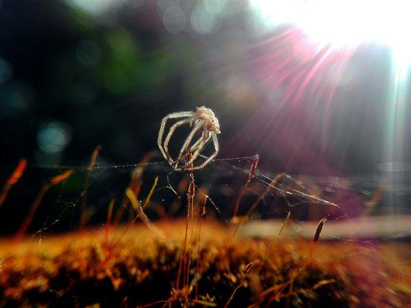 Spider sceleton with sun reflection... thumbnail