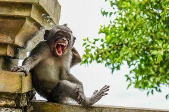 xushchaqchaq maymun thumbnail