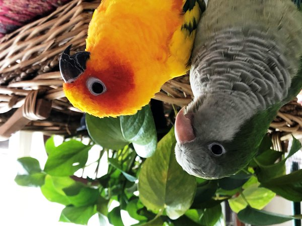 Two Birds with a Plant thumbnail