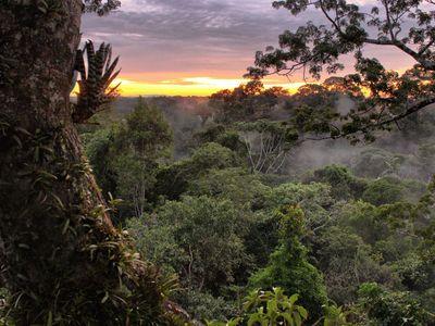 Yasuní National Park with the sun just under the horizon.