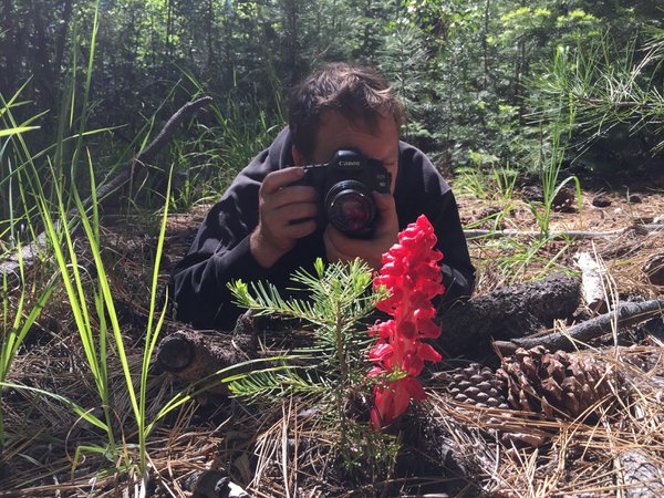 Like father, like son- Troye finds the elusive snow plant in Lake Tahoe thumbnail