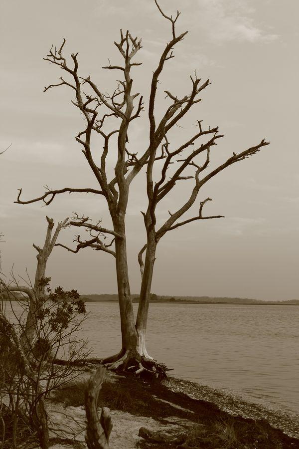 The Bay Tree thumbnail