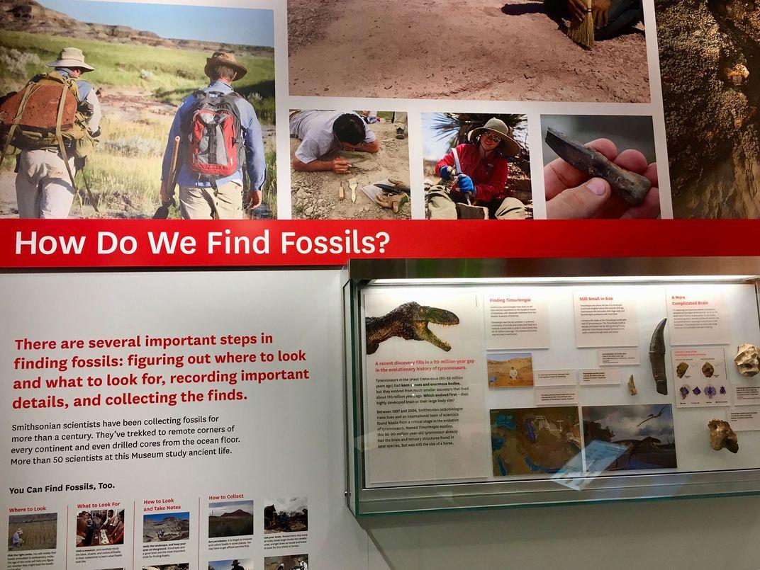 How Do Paleontologists Find Fossils?