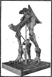 20110520083220tyrannosaurus-mount-202x300.jpg