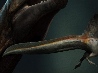 An artist's reconstruction of Spinosaurus, showing a paddle-like tail that would have helped it swim.