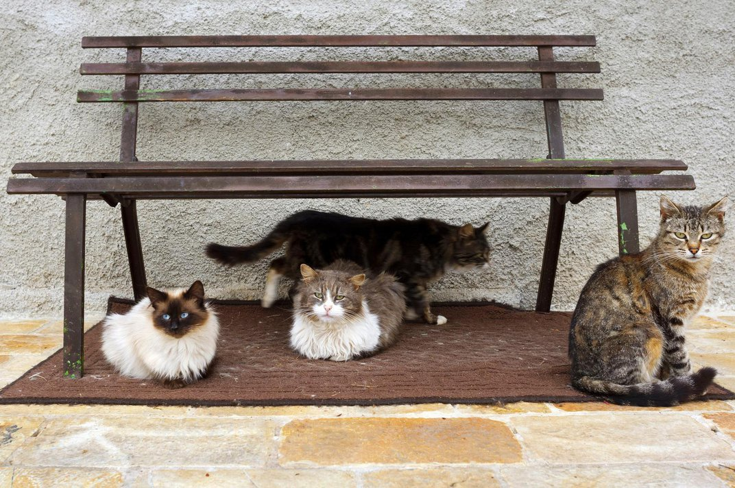 The Moral Cost of Cats