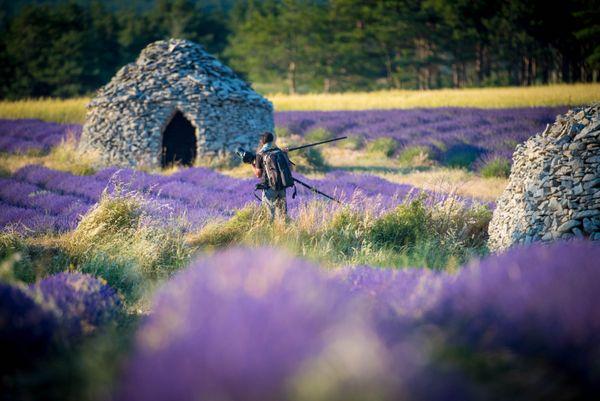 Shooting in lavender thumbnail