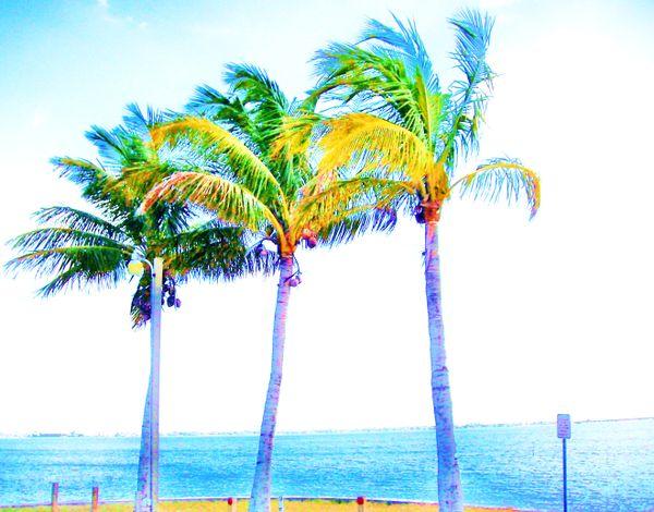 Painted Palms thumbnail